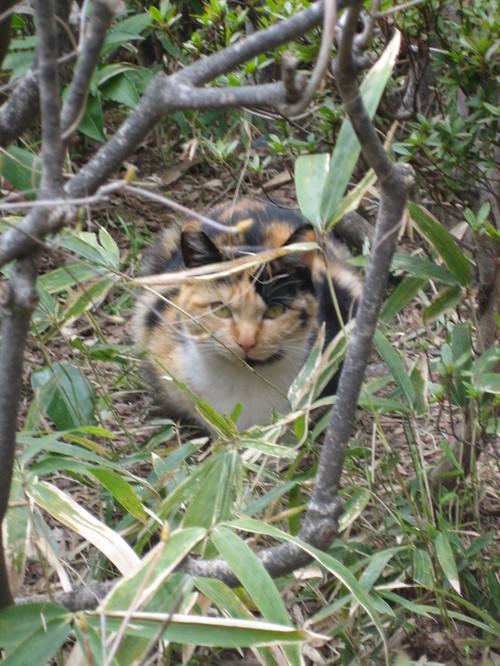 増上寺の猫