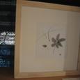 2006花・姫百合 Star lily