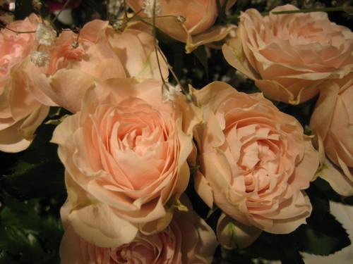 200612010_薔薇